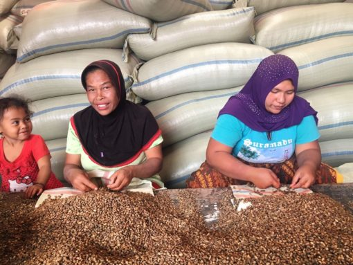 Sumatra Coffee Sorting