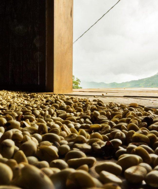 Peru Cenfrocafe Coffee Beans