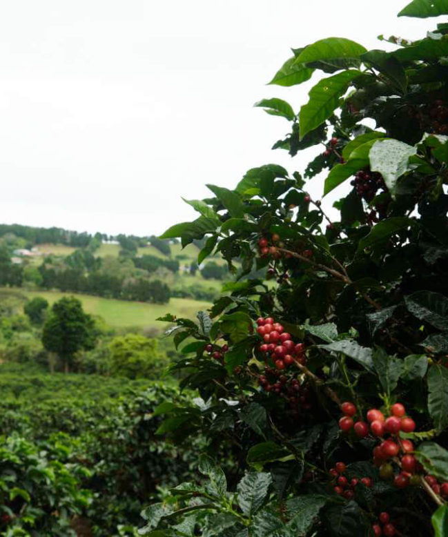 Costa Rica Finca Camacho Farm